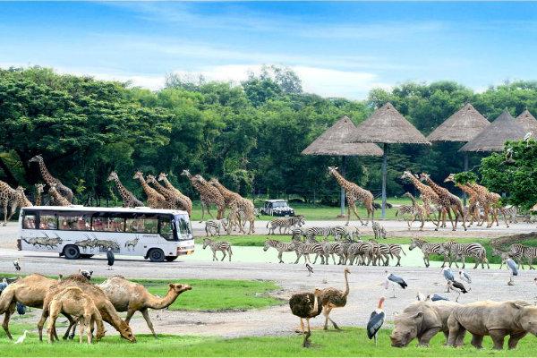 15-safari-world-with-marine-park-bangkok-tour